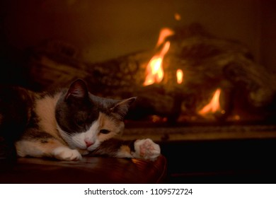 Cat Laying in Front of a Fireplace
