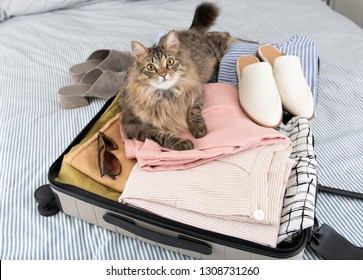 Cat Laying on Clothes Packed in Suitcase