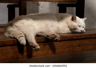 Cat laying on pews in old church in Roussillon France being lazy