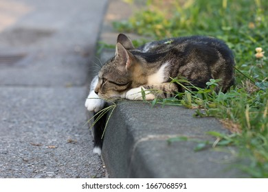 Cat laying on the roadside, by the road on the grass