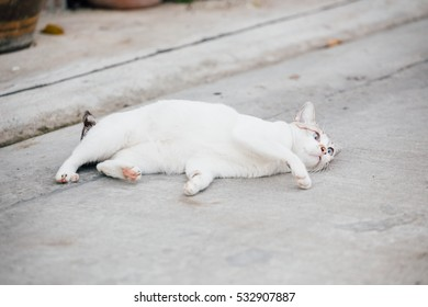 A cat laying on the street ground
