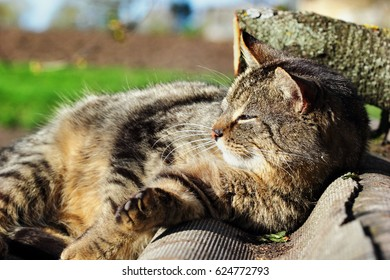 Cat Laying. In the roof . Laying on the sun. Countryside.Outdoor