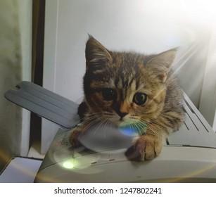 Cat Lela, kitty