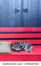 cat lie down on a red bench in front of a house in Bozcaada