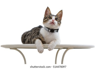 Cat lie down on a table and looking up isolated on white background