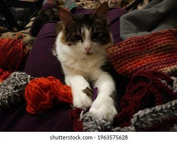 the cat lies near knitting