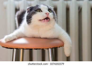 A cat lies on the belly on the stool