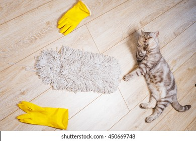 Cat lies on the floor of the house next to the gloves