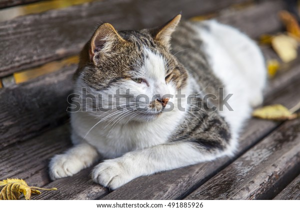 Sensational Cat Lies On Garden Bench Autumn Stock Photo Edit Now 491885926 Inzonedesignstudio Interior Chair Design Inzonedesignstudiocom