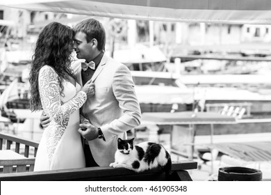 Cat lies on the handrails in the front of kissing wedding couple