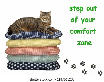 The cat lies on pile of pillows. There are his footprints. Step out of your comfort zone. White background.