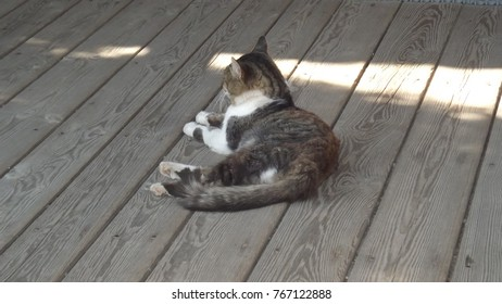 The cat lies on the porch of the house.