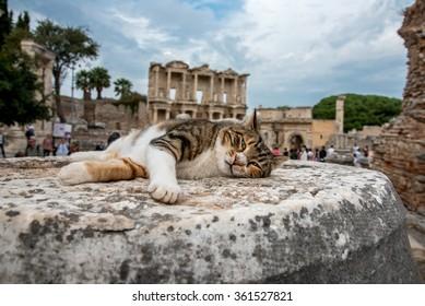 Cat lies on the ruins of Ephesus, Turkey