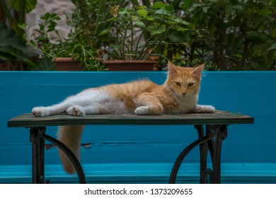 Cat lies relaxed on a table