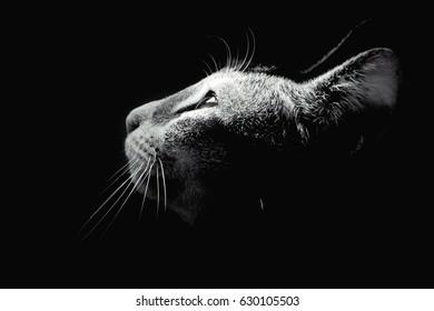 Cat Light & Shadow