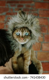 Cat in lion costume & Cat Lion Costume Stock Photo (Safe to Use) 741438397 - Shutterstock