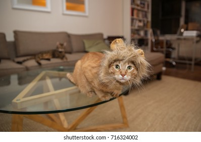 cat with lion costume on living room table - fake ears and mane on orange house kitten