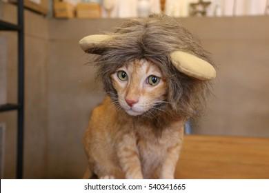 cat lion head hat close up reaction