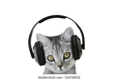 cat listening a music