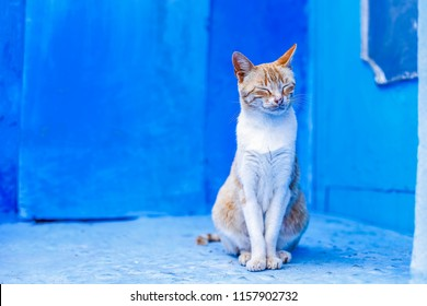 cat living in chefchaouen, Morocco