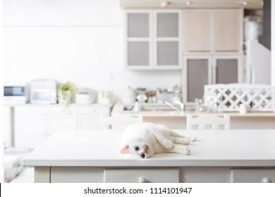 Cat living life, kitchen cat