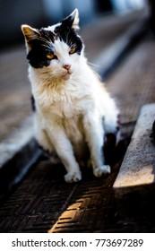Cat living in Recoleta cemetery