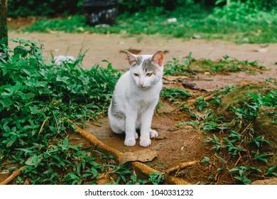 cat in loas