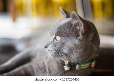 the cat looking