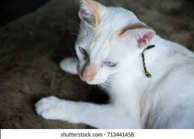 A cat looking.