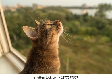 Cat looking from the balcony