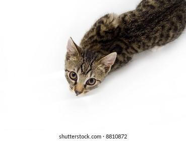 Cat looking from below
