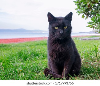 Cat Looking - Black Alley Cat, single cat, nature