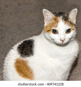 A cat looking at the camera with piercing eyes