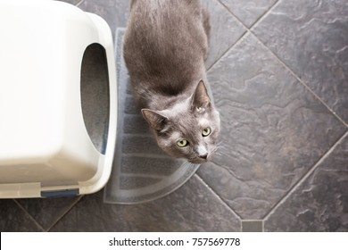 Cat looking at camera while next to litterbox