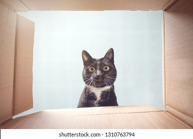 Cat looking curiously inside a cardboard box