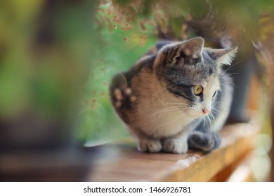 Cat looking at the direction of attention. Curiosity of cats. International Cat Day