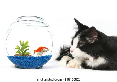 cat looking at a fish in a fish tank