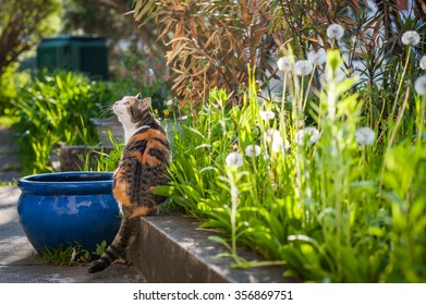 A cat is looking up in the garden