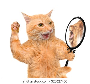 Cat looking into the mirror and seeing a reflection of a lion.