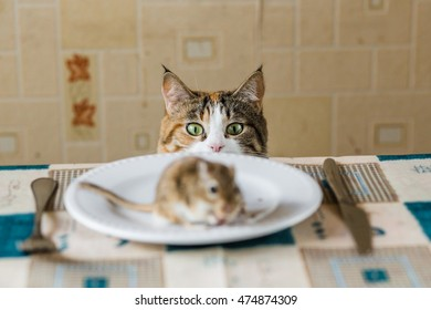 Cat looking to little gerbil mouse on the table before attack. Concept of prey, food, pest.