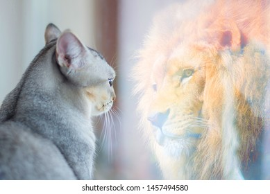 Cat looking at mirror and sees itself as a lion. Self esteem or desire concept.