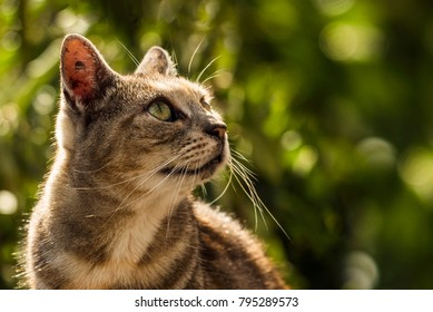 Cat looking off into distance in New Zealand. Space on right side of frame for text.