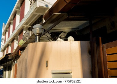 The cat are looking on the walls white.