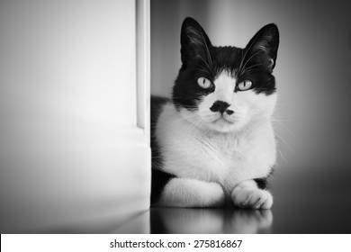 Cat looking out from behind a wall - black White version - focus on the eye. The left wall is easily used ad a copyspace