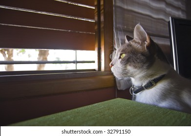 Cat looking out through a semi open window