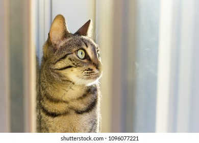 Cat looking out of window close up