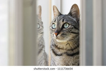Cat looking out of the window and thinking
