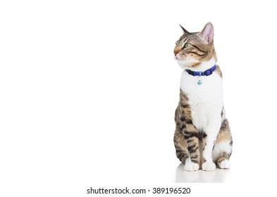 Fat Cat Overalls Www Picturesboss Com