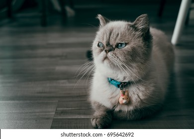 A cat looking to the side.
