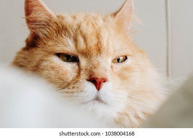 Cat is looking at something
